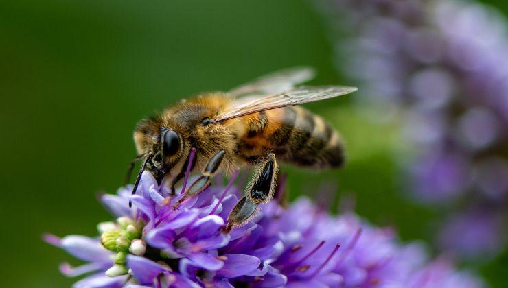 api morte -political24